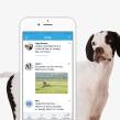 Dogways app. Um projeto de Design interativo e UI / UX de Gemma Busquets - 01.05.2016