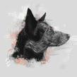 Dog portraits . A Fine Art & Illustration project by Ricardo Macía Lalinde - 05.20.2017