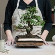 Mi Proyecto del curso: Diseño de macetas en cerámica. A H, werk, Innendesign, Dekoration von Innenräumen und Keramik project by Xènia Bas - 24.06.2020