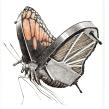 Animal music. Un progetto di Disegno di Redmer Hoekstra - 26.06.2020