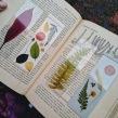 Separa hojas botánicos by Happy Green Family. A Kreativität project by Happy Green Family - 23.08.2020