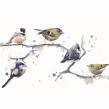Birds on a branch. Un progetto di Pittura ad acquerello di Sarah Stokes - 22.10.2020