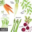 A-Z of Vegetables. Un proyecto de Ilustración, Ilustración digital e Illustración editorial de Melanie Chadwick - 24.11.2020
