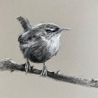 Charcoal and pastel song birds on toned paper. A Illustration project by Sarah Stokes - 27.01.2021