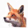 Watercolour fox. Un progetto di Pittura ad acquerello di Sarah Stokes - 01.11.2020