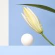 Plastic Surgery Website. Un proyecto de UI / UX, Br, ing e Identidad y Diseño Web de Silvia Ferpal - 07.02.2021