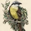 Tinta & Aves . A Illustration, Fine Art, Sketching, Botanical illustration, Ink Illustration, and Naturalist Illustration project by Ricardo Macía Lalinde - 02.28.2021