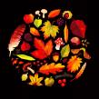 Autumn Colours. Un progetto di Illustrazione, Illustrazione digitale, Illustrazione infantile e Illustrazione editoriale di Gemma Gould - 09.03.2021