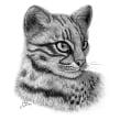 Gato montés sudamericano (Leopardus geoffroyi). Un proyecto de Ilustración e Ilustración naturalista de Julia Rouaux - 15.10.2008