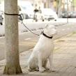 Ayuntamiento de Barcelona. Perros en espera. Um projeto de Publicidade, Stor e telling de Gabriel García de Oro - 26.03.2021