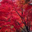 Color of Seasons. Un proyecto de Fotografía y Fotografía artística de Yaopey Yong - 08.04.2021