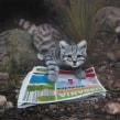 El gato andino desalojado. Un proyecto de Pintura de Laura Cuadros - 03.06.2021