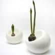 Bulb planter. Um projeto de Design de produtos, Design industrial e Cerâmica de Marre Moerel - 08.07.2021