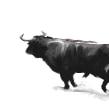 desmayo (fainting) . Un proyecto de Cine, vídeo, televisión, Animación y Bellas Artes de Gonzalo Cordero de Ciria - 22.06.2014