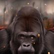 Gorila. Un proyecto de Ilustración, Bellas Artes y Pintura de Jaime Sanjuan Ocabo - 15.03.2015