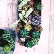 [Terrarios de Cactus & Suculentas]. Um projeto de Design e Paisagismo de Compañía Botánica - 21.05.2018