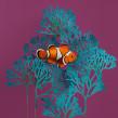 Pez payaso. . Um projeto de 3D, Animação, Artes plásticas, Design de cenários, Escrita, Papercraft, Animação de personagens e Animação 3D de Diana Beltran Herrera - 20.09.2019