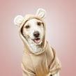 HEY Puppies. Un proyecto de Fotografía de moda de Santos Román - 04.10.2019