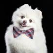 Mi Proyecto del curso: Fotografía de perros. Un proyecto de Fotografía de retrato de Santos Román - 03.12.2019