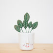 StumpWork. Un proyecto de 3D, Bordado e Ilustración botánica de Studio Variopinto - 05.04.2020