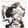 GRAN SALÓN MEXICO 2018. A Digital illustration project by Jimena Estíbaliz - 04.06.2020