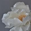 Single paper flowers. Um projeto de Artesanato, Papercraft e Decoração de interiores de Eileen Ng - 21.07.2020