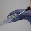 Estudios de una Garza Azul. A Illustration und Aquarellmalerei project by Antonia Reyes Montealegre - 27.05.2020