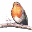 Christmas robin. Un proyecto de Pintura a la acuarela de Sarah Stokes - 22.10.2020