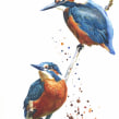 Kingfishers on a branch. A Aquarellmalerei project by Sarah Stokes - 22.10.2020