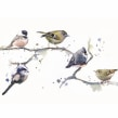 Birds on a branch. A Watercolor Painting project by Sarah Stokes - 10.22.2020
