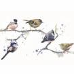 Birds on a branch. Un proyecto de Pintura a la acuarela de Sarah Stokes - 22.10.2020