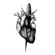 Illustration archives: various. Um projeto de Ilustração, Desenho de tatuagens, Ilustração botânica e Ilustração com tinta de Sophie Mo - 02.11.2020