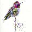 Watercolour hummingbird watercolour and watercolour ink. Un proyecto de Pintura a la acuarela de Sarah Stokes - 25.02.2021