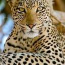 La Mancha del Jaguar