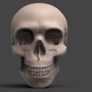 Craneo Study. Un proyecto de 3D de Jean Rivera - 15.11.2017