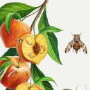 Plagas de agricultura. Um projeto de Ilustração, Ilustração digital e Infografia de José Emilio Toro Pareja - 16.09.2018