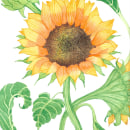 Mi Proyecto del curso: Ilustración botánica con acuarela-Girasol. A Illustration, Fine Art, and Artistic drawing project by Patricia Potenciano - 10.06.2018