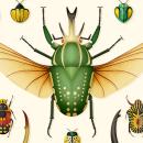 Coleoptera. Colección de ilustraciones de escarabajos. Um projeto de Ilustração, Design gráfico, Ilustração vetorial e Ilustração digital de David Comerón - 17.10.2018