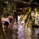 In the river. Un proyecto de Fotografía, Cine, vídeo, televisión y Animación de Gloria Gómez - 08.11.2018