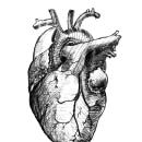 Corazón de la pluma a la pantalla. Um projeto de Esboçado, Desenho e Desenho artístico de Erick Padilla - 28.11.2018