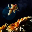 Fotografía / Fotomontaje. Un proyecto de Postproducción, Retoque fotográfico y Fotografía digital de sarah rodríguez iglesias - 23.05.2019