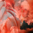 Soft Dreams. Um projeto de Design, Fotografia, Pós-produção, Colagem, Retoque fotográfico, Criatividade, Design de cartaz, Fotografia digital e Fotografia artística de Ana Valverde Prieto - 09.07.2019