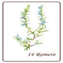 Mi Proyecto del curso: Ilustración botánica con acuarela Rueda de Flores. Um projeto de Ilustração de Patricia Sueta - 02.09.2019