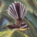 NZ Birds. Un proyecto de Ilustración e Ilustración digital de Érika Casab - 03.09.2019