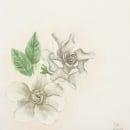 Acuarela botanica. Un proyecto de Ilustración y Pintura a la acuarela de Sofia Allegretti - 24.08.2019