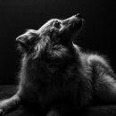 Meu projeto do curso: Introdução à fotografia de cachorros. Un projet de Photographie, Photographie de portrait , et Photographie artistique de Daniel Carvalho - 31.12.2019