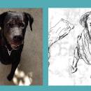 Mi Proyecto del curso: Rotoscopia a mi perro. Un projet de Animation de Kris Vegá - 27.01.2020