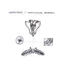 Textil illustration. Un proyecto de Ilustración botánica e Ilustración textil de Cristina Calvache Quesada - 27.02.2020
