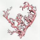 Kappaphycus alvarezii. A Illustration, and Botanical illustration project by Raquel Vázquez - 04.01.2020