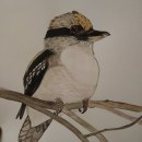 Kookaburra en acuarela durante la Cuarentena. Un proyecto de Pintura a la acuarela de Raquel Soto Llácer - 25.04.2020